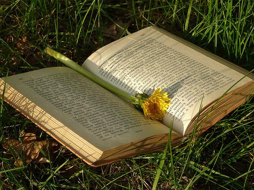 Sognare tra le pagine di un libro